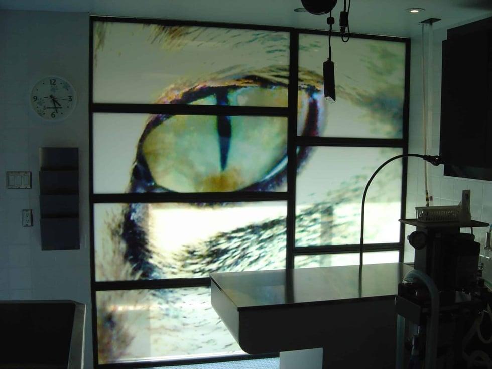 veterinary window film.jpg